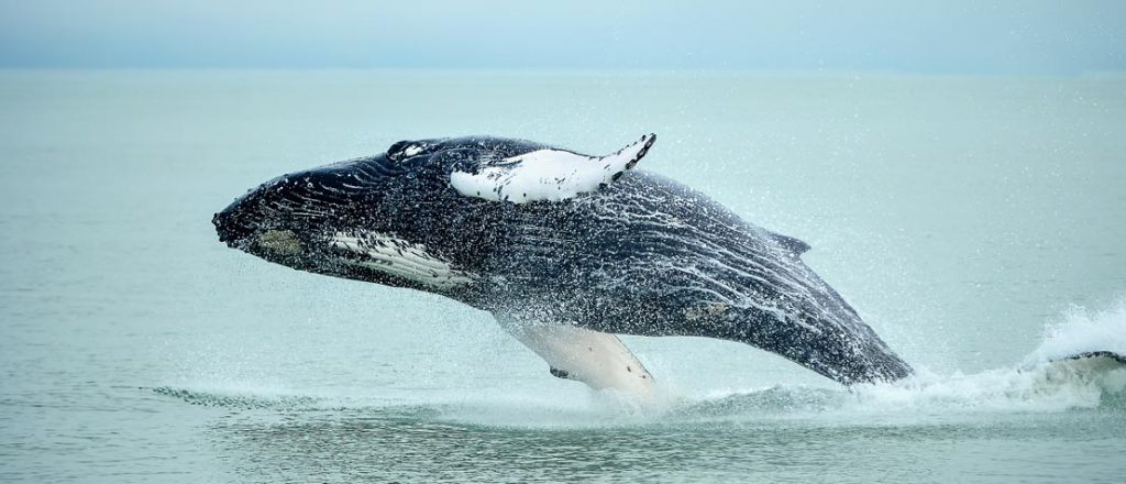 Maison Fiset House - Whale Watching